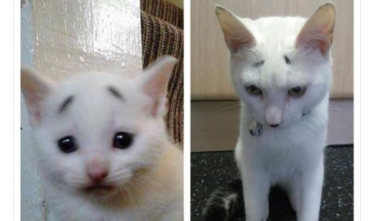 從小委屈巴巴!白貓自帶「憂鬱八字眉」 主人一眼愛上牠:無法拒絕那張臉